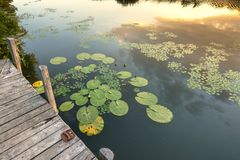 Peaceful place at the pond Stock Photography