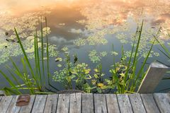 Peaceful place at the pond Royalty Free Stock Images
