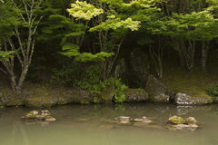Peaceful Pond. Pond at the Japanese Garden of Contemplation, Hamilton Gardens, New Zealand Stock Images