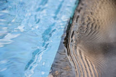 Peaceful pool reflections with soft ripple and current moving across on the water surface. Clean water is a perfect play to relax Royalty Free Stock Image