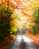Peaceful quiet road Stock Image