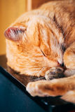 Peaceful Red Kitten Cat Sleeping On Bed Stock Images