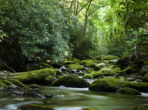 Peaceful river flowing over rocks. Forest river flowing gently over moss covered rocks royalty free stock image