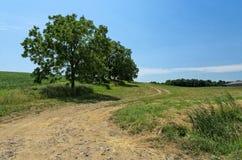 Peaceful Rural Dirt Road Stock Photo