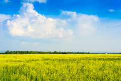 Peaceful rural landscape in wide field Royalty Free Stock Image