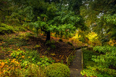 Peaceful scene of autumn Royalty Free Stock Photography