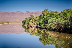 Peaceful scene in a oasi, South Morocco Stock Image
