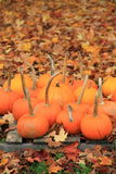 Peaceful scene of pumpkins and leaves Stock Image