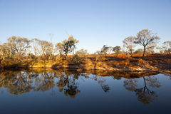 Peaceful Scene at Waterhole in Outback. Optical reflection of trees on the a mirror-like surface of a waterhole in Outback Australia making it a peaceful and Stock Photos