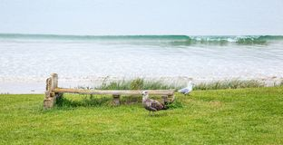 Peaceful scene of wooden bench for lying your back on the grass garden facing sandy beach with pigeon and seagull bird nearby. Royalty Free Stock Photography
