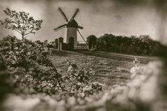 Vintage windmill with foreground flowers on grass hill - retro photography. Peaceful scenery with old windmill surrounded by flowers and green fields on retro royalty free stock photo