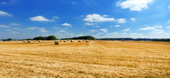 Peaceful scenery with rye fields and sky. Peaceful scenery with rye field and sky Royalty Free Stock Photo