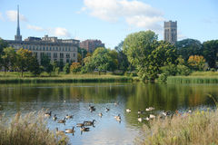 Peaceful Scenic. A picture of a peaceful scenic with pond and waterfowl Royalty Free Stock Photo