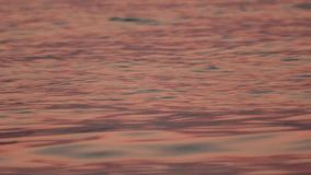 Peaceful sea water during dusk. Flawless water surface. Beautiful seascape. Amazing nature, relaxed atmosphere. Perfect. Vacation. Slow motion, close up view stock footage