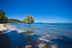 Peaceful seashore. And tree under the clear blue sky Stock Images