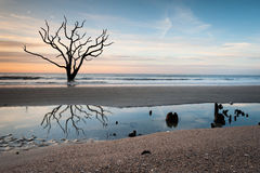 Peaceful Serene Lone Tree Beach Scenic Landscape Royalty Free Stock Photography