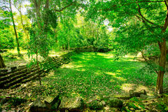 Peaceful spot. In middle of forest in Asia Royalty Free Stock Photo