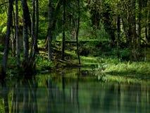 Green lake Stock Images