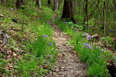 Peaceful Springtime Trail. A peaceful trail meanders through the woods and wild flowers on a cool spring day in the Missouri Ozarks Stock Photo