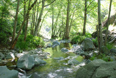 Peaceful Stream. Peaceful and quiet stream surrounded by green vegetation. A scene from Fish Canyon Falls trail Stock Images