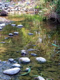 Peaceful stream. A small stream Stock Images