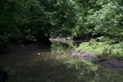 Peaceful stream in the forest royalty free stock photos