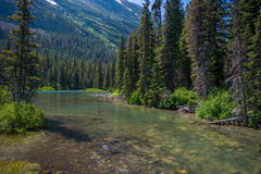 Peaceful stream, montana Stock Photography