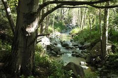 Tranquil Stream. Running forest stream on a peaceful spring surrounded by vegetation and trees Stock Photo