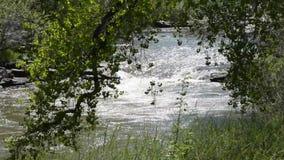 Peaceful stream. A peaceful stream seen through trees stock video