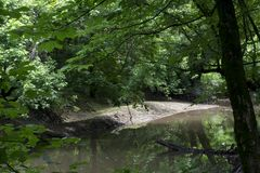 Peaceful stream in the forest royalty free stock image