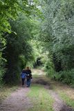 Peaceful stroll down a leafy lane in the English Countryside stock image