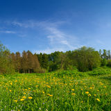 Peaceful summer landscape Royalty Free Stock Photos