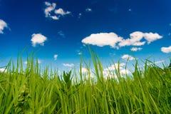 Peaceful summer rural landscape Stock Images