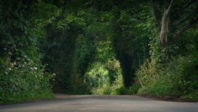 Ground Level View Of Road Through Summer Countryside stock footage