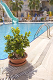 Peaceful summertime at swimming pool Stock Image
