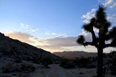 Peaceful sunrise with blue sky and tree in the desert in Yucca Valley California. During the winter Royalty Free Stock Photography