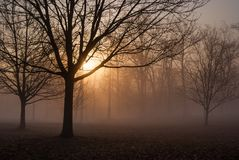 Foggy Morning 20 royalty free stock photo
