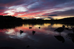 Peaceful Sunset. Sunset at Ostensjovannet in Oslo, Norway. Fall 2015 Stock Photography