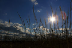 Peaceful sunshine in the foreground grass. royalty free stock photography
