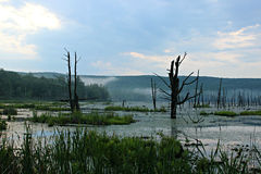 Peaceful Swamp. Wildlife Conservation Area swamp just before night fall royalty free stock image