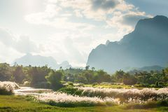 Peaceful time, evening summer landscape. Wild cane or grass flow. Er blowing in the wind, blue mountain and clouds background. Warm tone. Vang Viang, Laos royalty free stock photography