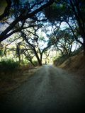 Peaceful Trail into the California Woods. A peaceful trail leading through the woods outside San Diego California on a sunny day royalty free stock photo