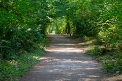 A peaceful tranquil path or trail into the empty forest pressing into nature, persevering, challenging, and conceptually pressing. On royalty free stock photo
