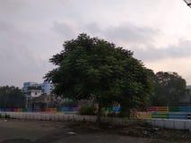 Peaceful tree stock photo