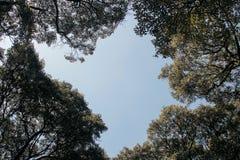 Peaceful Tree. Panorama landscape of peaceful tree in Keraton Solo Area, Surakarta Royalty Free Stock Photo