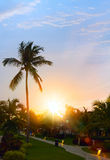 Peaceful tropical background; Sunset in the tropic Royalty Free Stock Photos