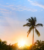 Peaceful tropical background; Sunset in the tropic Stock Photography