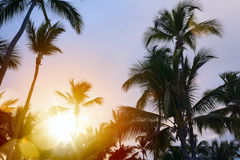 Peaceful tropical background; Sunset in the tropic Royalty Free Stock Photography
