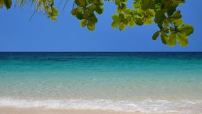Peaceful tropical beach in UHD. UHD shot of amazing tropical beach stock video