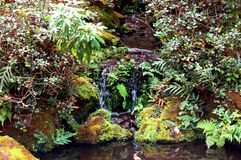 Peaceful tropical brook. Picture depicts a beautiful tropical brook on the island of oahu hawaii Royalty Free Stock Photos